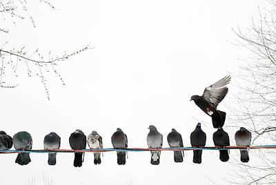 Of Birds Photograph - Row Of Pigeons On Wire by Ernest McLeod