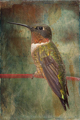 Tiny Bird Photograph - Ruby Throated Hummingbird by Bonnie Barry