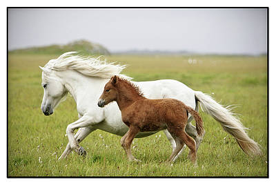 Wild Horse Photograph - Running Horses.... by Gigja Einarsdottir