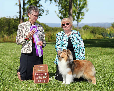 Sable Sheltie Photograph - Rwb Mindalyn Dream On by Chris Lynch