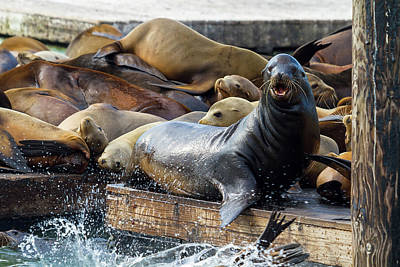 Abstract Shapes Janice Austin Royalty Free Images - Sea Lions on the Floating Dock in San Francisco Royalty-Free Image by David Gn