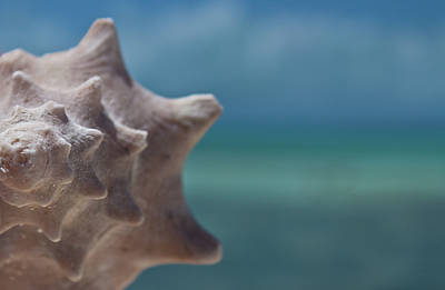 Sea Animals Photograph - Shell by Gizet Gonzalez
