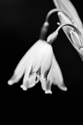 Photograph - Snow Drop by Kimberly Deverell