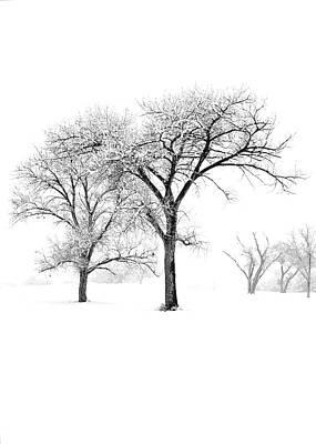 Snow Trees II Art Print by Glennis Siverson
