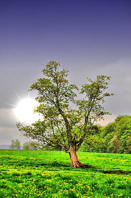 Landscape Photograph - Spring Sun by Emily Stauring
