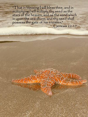 Photograph - Starfish Washed Ashore Genesis 22 by Cindy Wright