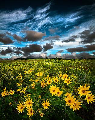 Natur Photograph - Summer Solitude by Phil Koch