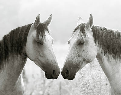 Gray Horses Photograph - The Greys by Ron  McGinnis