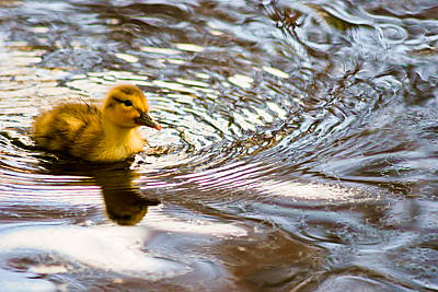 Photograph - The Real Rubber Ducky by Kimberly Deverell
