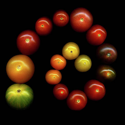 In A Row Photograph - Tomatoes by Photograph by Magda Indigo