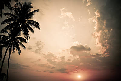 Photograph - Tropical Sun by Nila Newsom