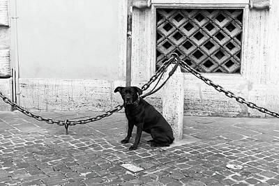 Dog Pics Photograph - Waiting by John Rizzuto