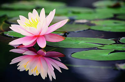 Reflection Photograph - Water Lily In Lake by Anakin Tseng