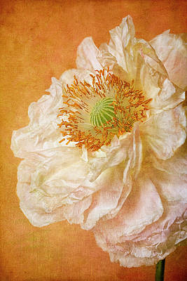 White Double Poppy Art Print by © Leslie Nicole Photographic Art