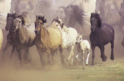 Wild Horses Running Art Print by John Foxx