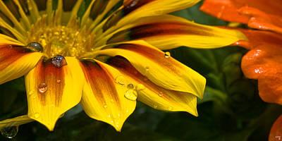 Yellow Drops Art Print