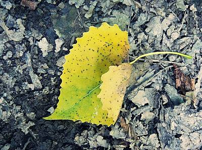 Photograph - Yellow Spotted Leaf by Susan Olga Linville