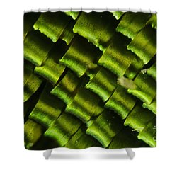 Butterfly Wing Scales Shower Curtain by Raul Gonzalez Perez