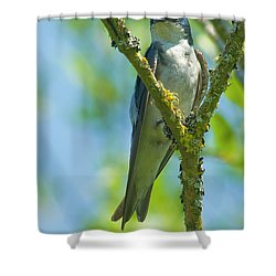 Shower Curtain featuring the photograph Bird In Tree by Rod Wiens