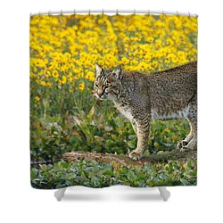 Bobcat In The Swamp Shower Curtain by Myrna Bradshaw
