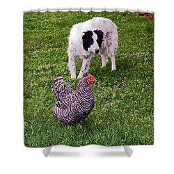 Border Collie Herding Chicken Shower Curtain by Sally Weigand