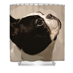 Boston Terrier Shower Curtain by Donna G Smith
