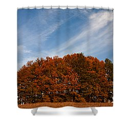 Compact Forest Shower Curtain by Evgeni Dinev
