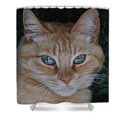 Fat Cats Of Ballard 5 Shower Curtain