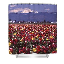 Field Of Tulips And Mount Baker Shower Curtain