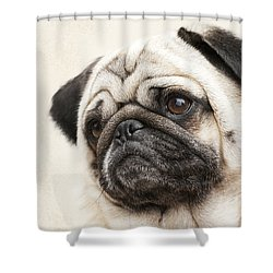 L-o-l-a Lola The Pug Shower Curtain
