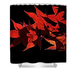 Leaves Of Red Shower Curtain by Heather Applegate