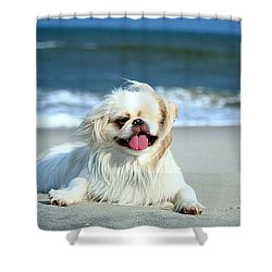 Lifes A Beach Shower Curtain by Ania M Milo