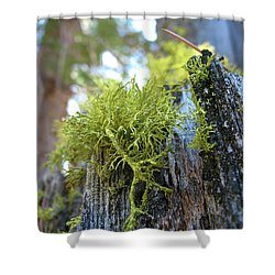 Macro Life Shower Curtain by Ania M Milo