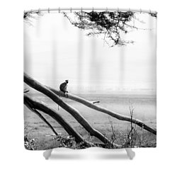 Monkey Alone On A Branch Shower Curtain by Darcy Michaelchuk