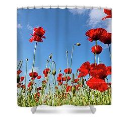 Poppies Season Shower Curtain