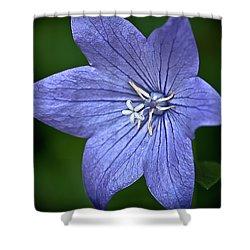Purple Balloon Flower Shower Curtain by  Onyonet  Photo Studios