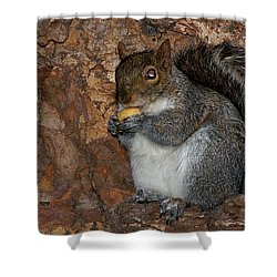 Shower Curtain featuring the photograph Squirrell by Pedro Cardona