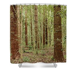 Shower Curtain featuring the photograph Sylvan Beauty by Werner Padarin