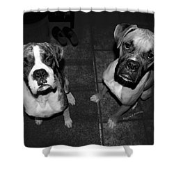The Cat Did It Shower Curtain by DigiArt Diaries by Vicky B Fuller