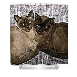 Tonkinese Pals Shower Curtain by Sally Weigand