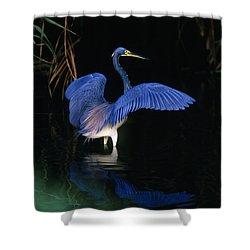 Tri-colored Heron - Fs000031 Shower Curtain