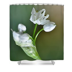 White Blossom 3 Shower Curtain