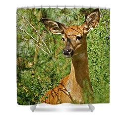 Whitetail Doe Painterly Shower Curtain by Ernie Echols