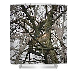 Wood Duck Shower Curtain by Sue Stefanowicz