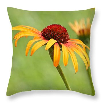 Throw Pillow featuring the photograph Coneflower by Eve Spring