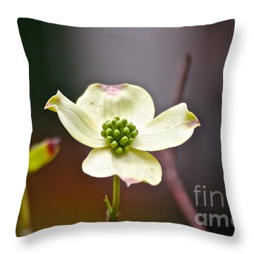 Throw Pillow featuring the photograph Dogwood by Eve Spring