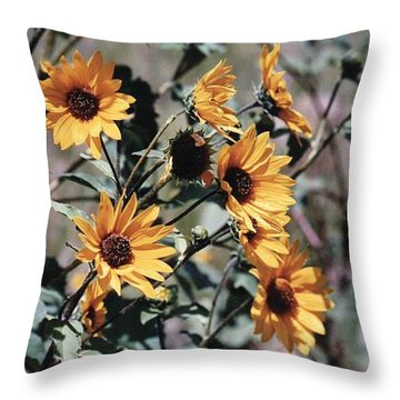 Throw Pillow featuring the photograph Arizona Sunflowers by Juls Adams