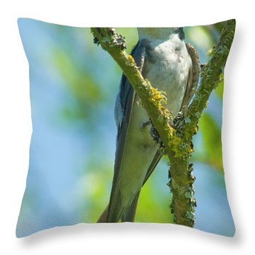 Throw Pillow featuring the photograph Bird In Tree by Rod Wiens