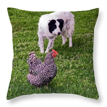 Border Collie Herding Chicken Throw Pillow by Sally Weigand