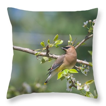 Throw Pillow featuring the photograph Cedar Waxwing by Margaret Palmer